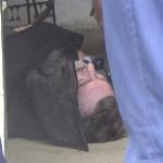 A băut și a murit: Garaj transformat în fabrică de alcool contrafăcut – VIDEO
