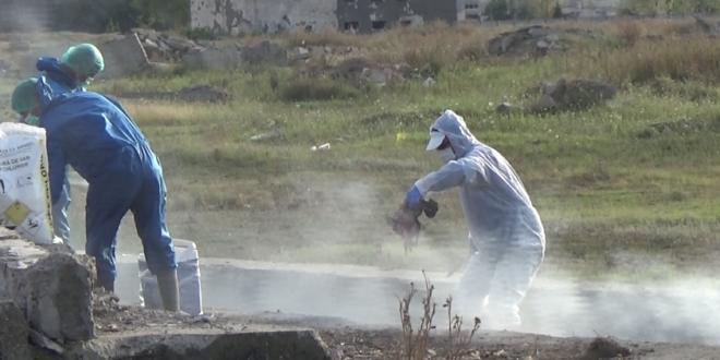 Suspiciune de pestă porcină la o gospodărie civilă, cu peste 70 de porci, în municipiul Călărași  / Video